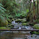 Toorongo River by Di Jenkins