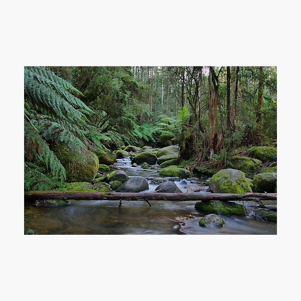 Toorongo River Photographic Print