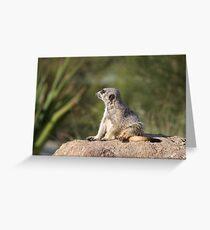 Meerkat at Werribee Open Range Zoo Number 2 Greeting Card