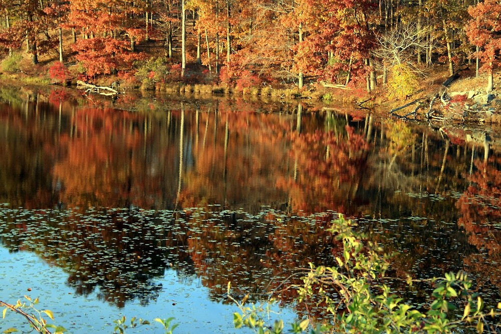 Fall Colors by traveler25