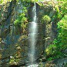 Woolgoolga Creek Waterfall by Penny Smith