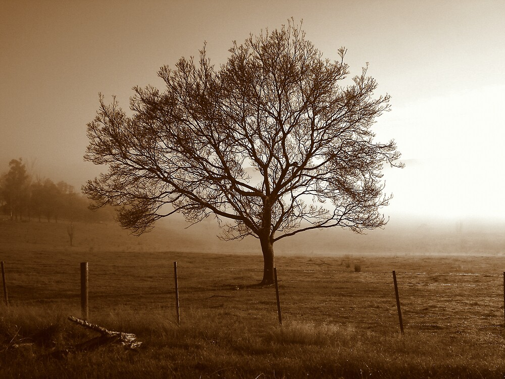 The Cold Morning Fog by Chris Kean