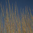 Spinifex by Mark Williamson