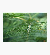 Serene Green Photographic Print