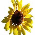 A Sunny Flower by Heather Friedman