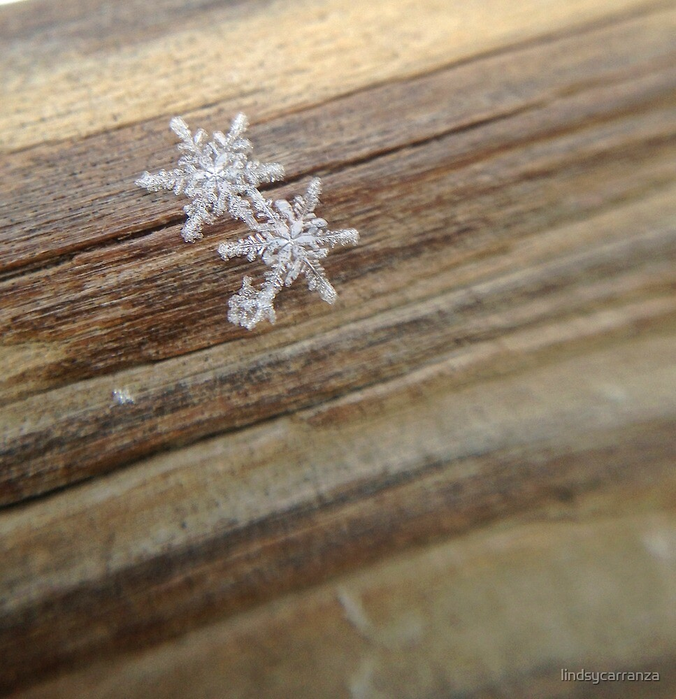 Two Snowflakes by lindsycarranza