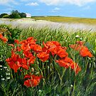 South Downs Poppies by Paula Oakley