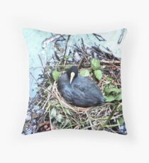 Coot on its nest  Throw Pillow