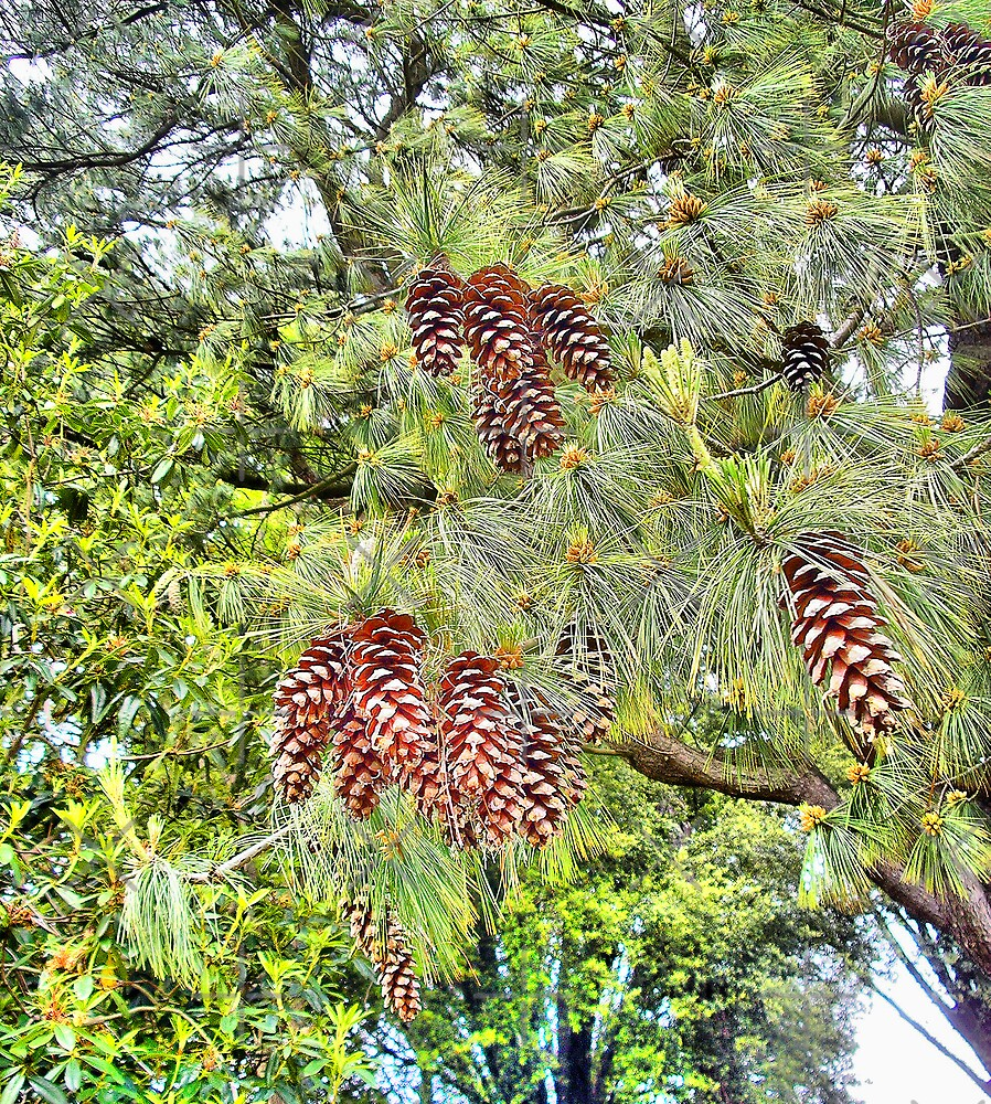 Cones by Catherine Hamilton-Veal  ©