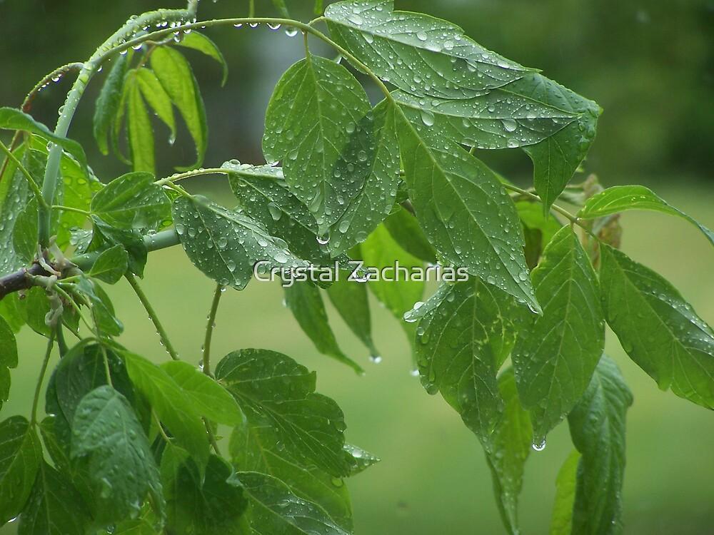 Rain At Last by Crystal Zacharias