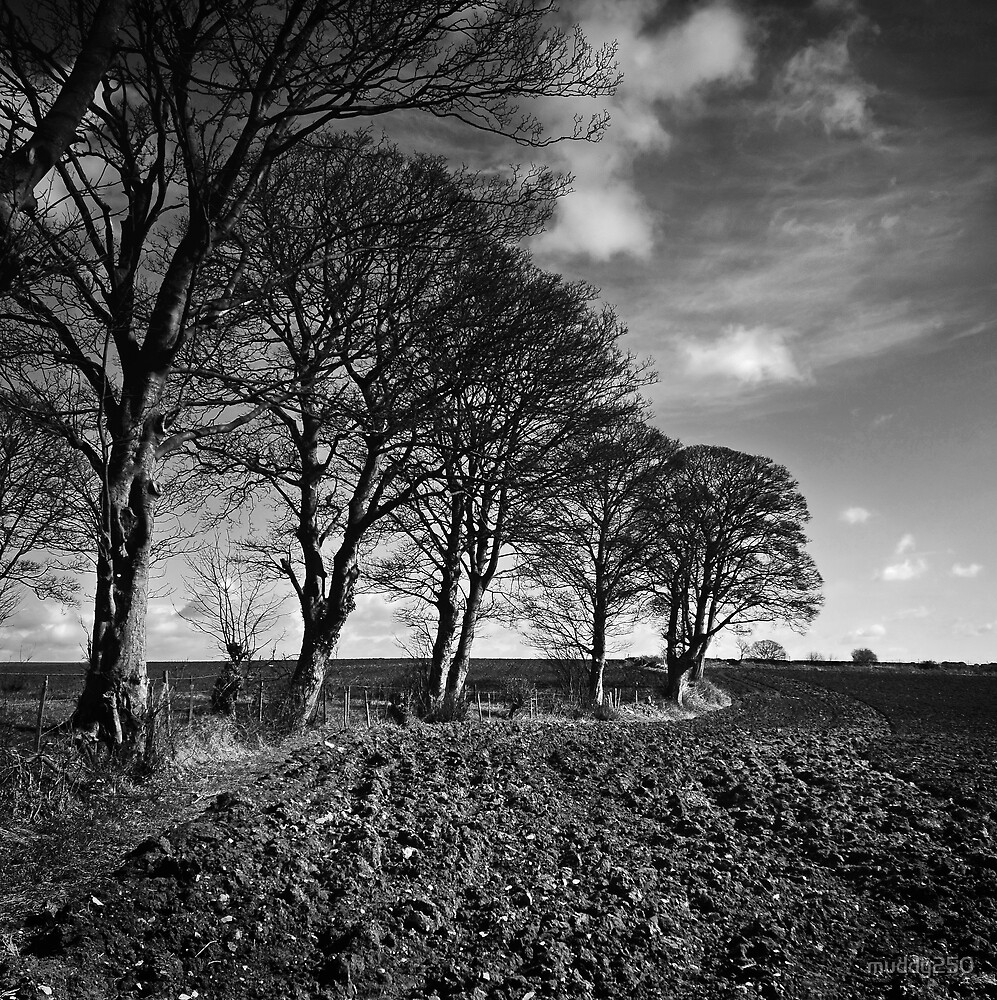 Ploughed Field by Chris Charlesworth
