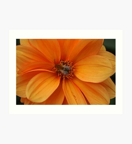 Nectar Points Available Here Art Print