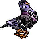 Patchwork coloured pigeon by Ruud van Koningsbrugge