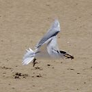 Fish Delivery (Greater Crested Tern) by lezvee