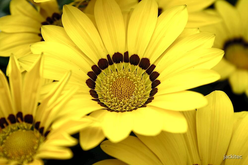Big Yellow by jackitec