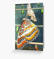 Cethosia Biblis One Greeting Card