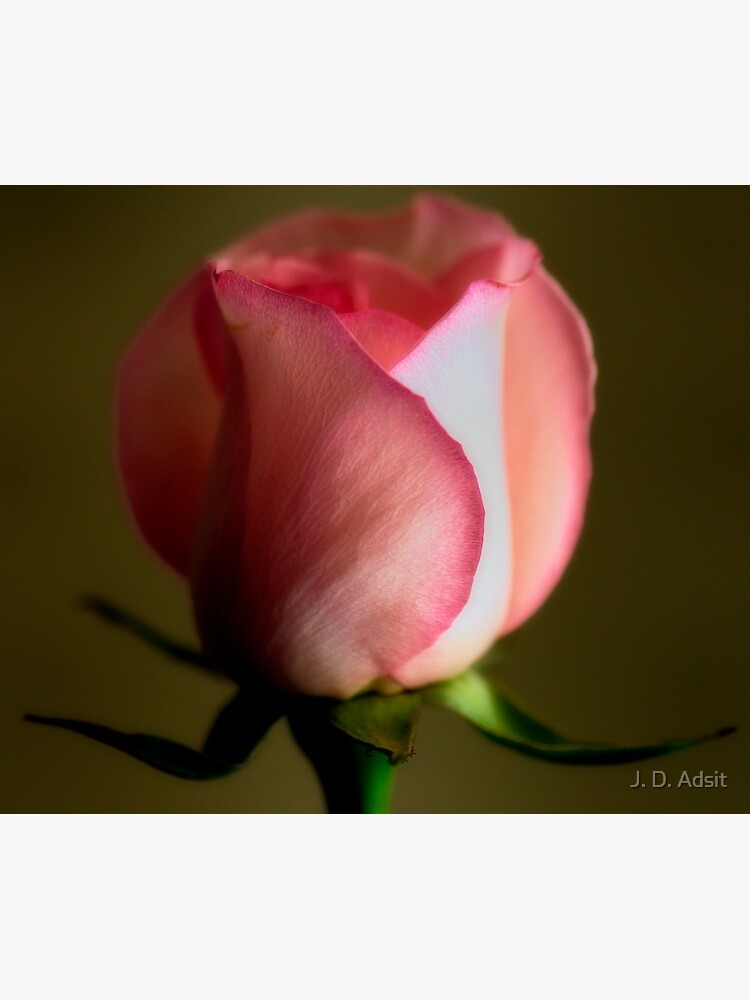 A Rose for Every Moment by adsitprojectpro