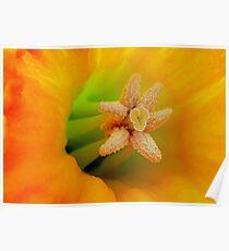 Macro Daffodil Poster