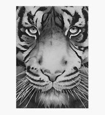 Tiger. Photographic Print