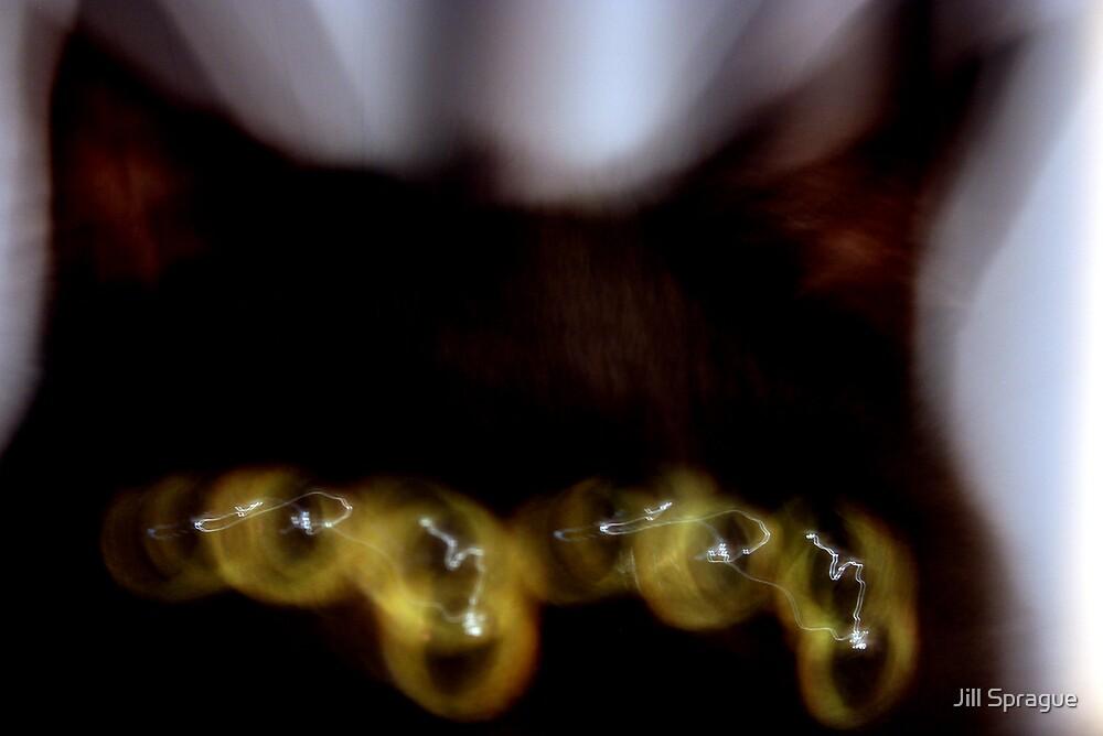 Spider Eyes by Jill Sprague