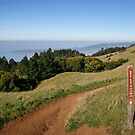 Mount Tamalpais: Matt Davis Trail by Stuart Green
