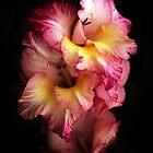 Gladiola by Jessica Jenney