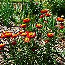 Frühlingsblumen von Evita