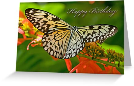 Happy Birthday Butterfly by Bonnie T.  Barry