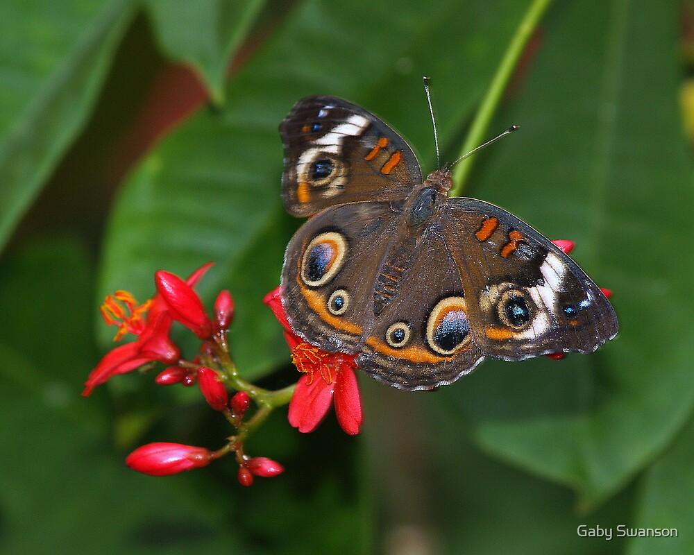 Owl Butterfly by Gabriele Swanson