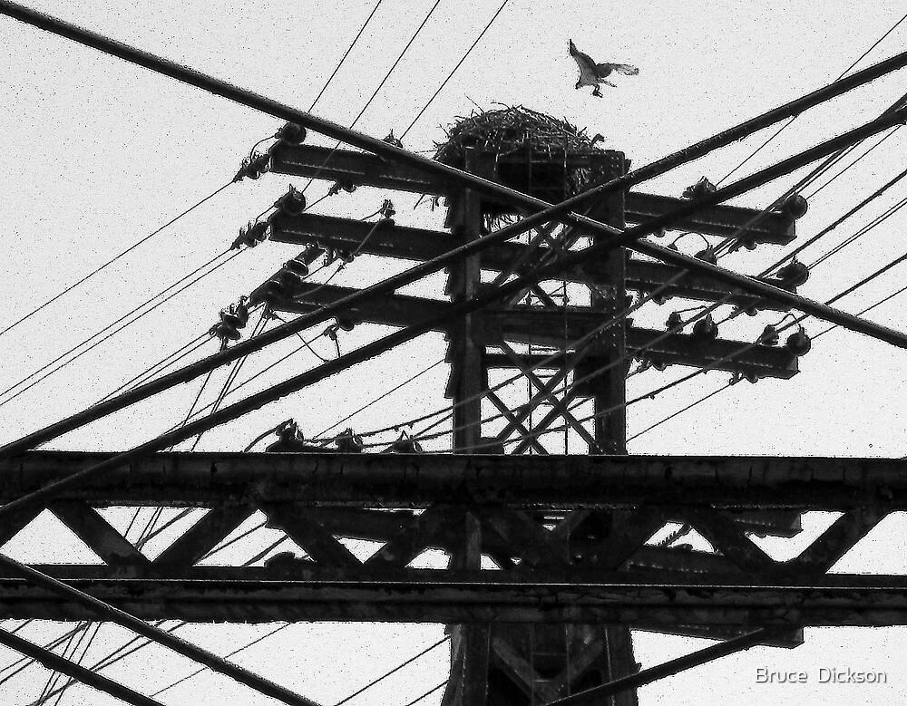 nest by Bruce  Dickson