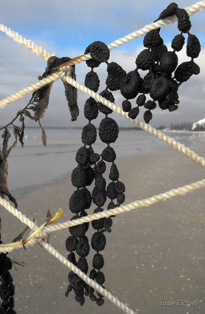 BEADS... CAUGHT IN THE NET... by Jodie Elchah