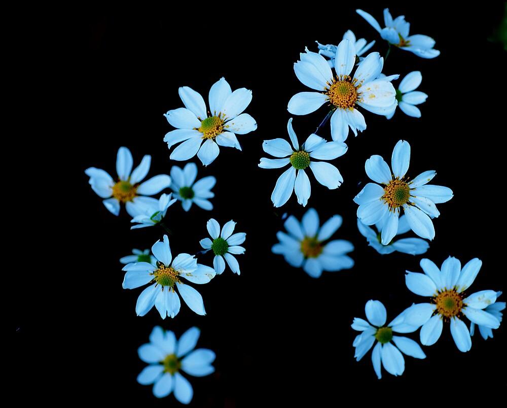 floating flowers  by alfarman