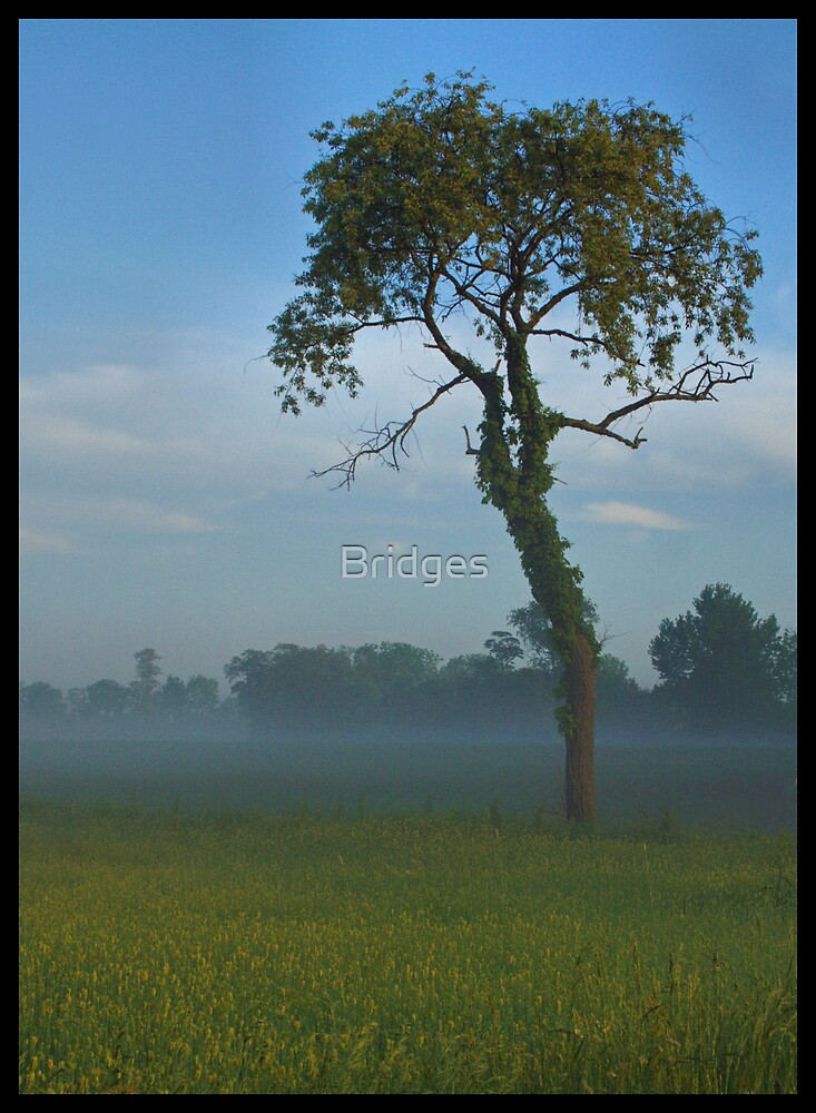 Tree In Morning Mist by Bridges