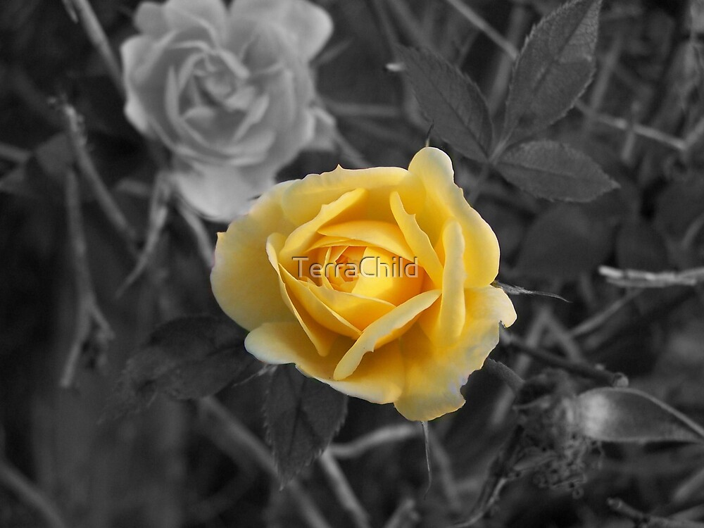 Yellow Rose by TerraChild