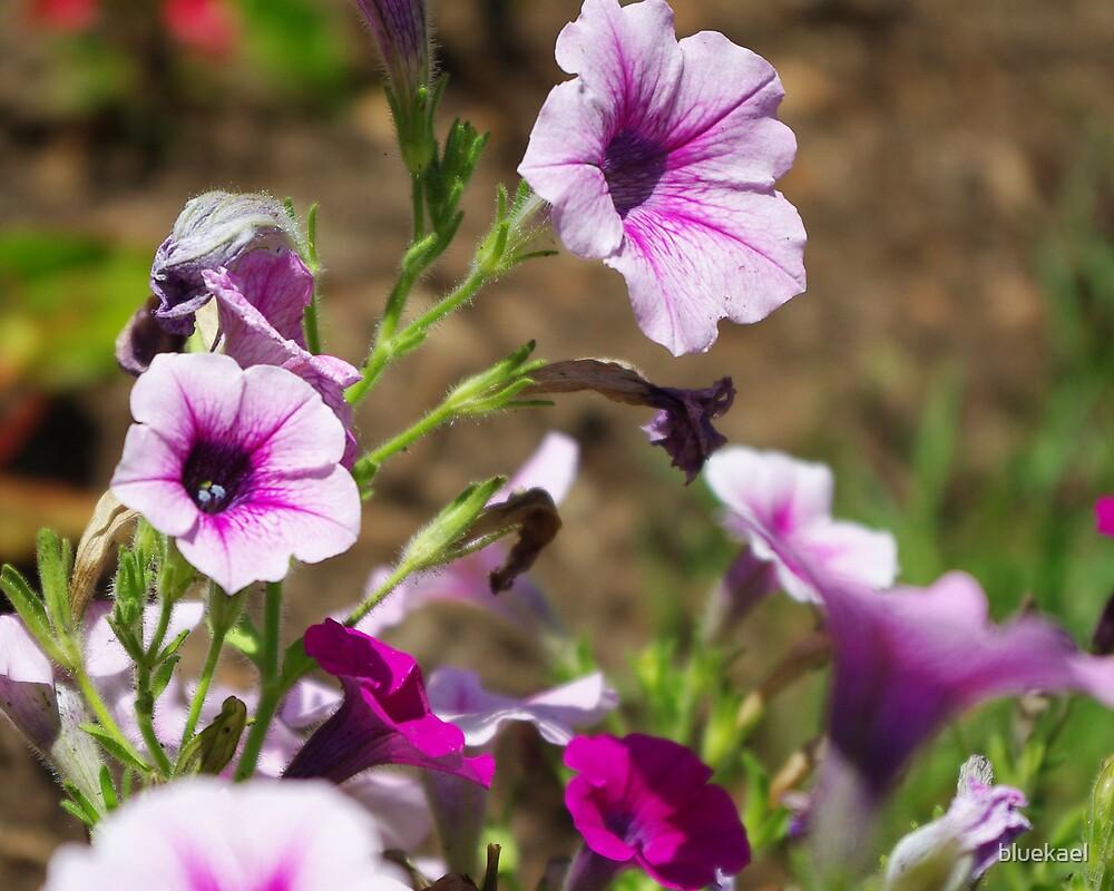 pale purple by bluekael