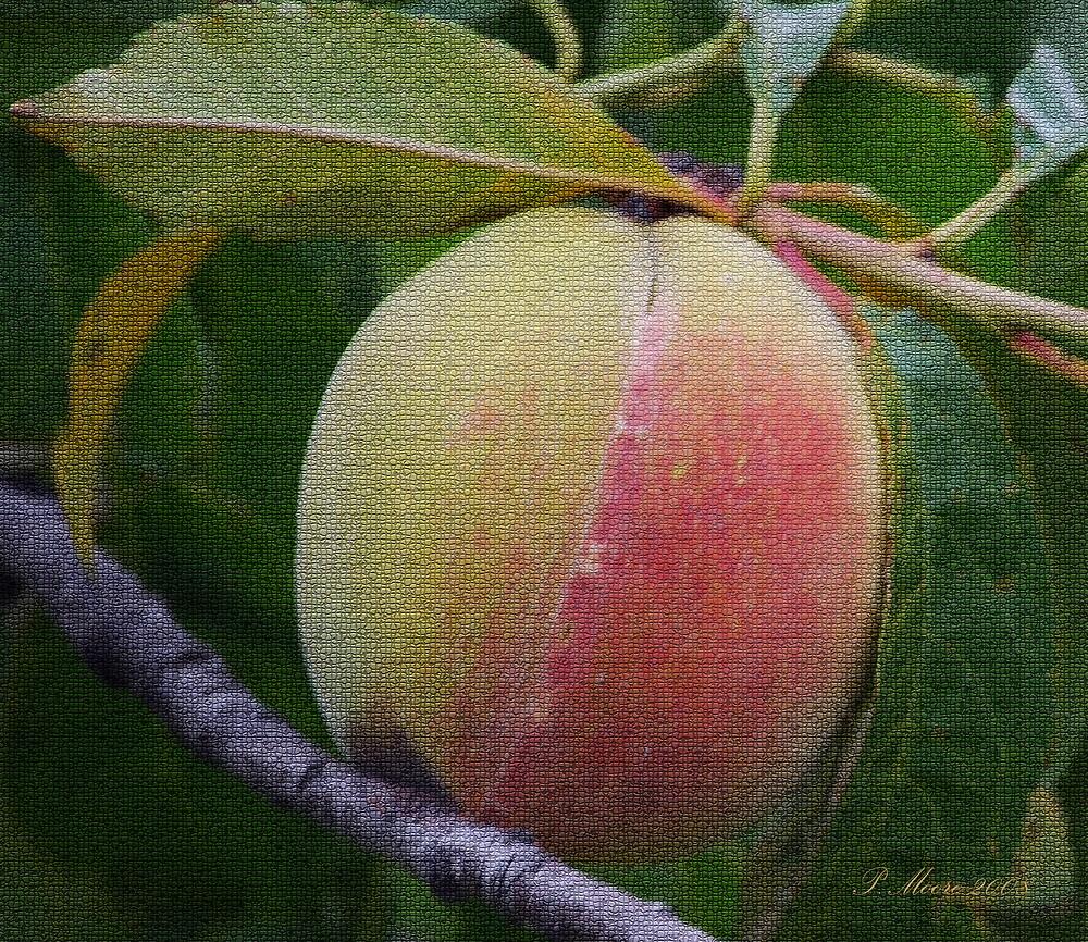 Peachy by Pat Moore