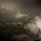 Arthur River in Mist 1 by Andrew Smyth