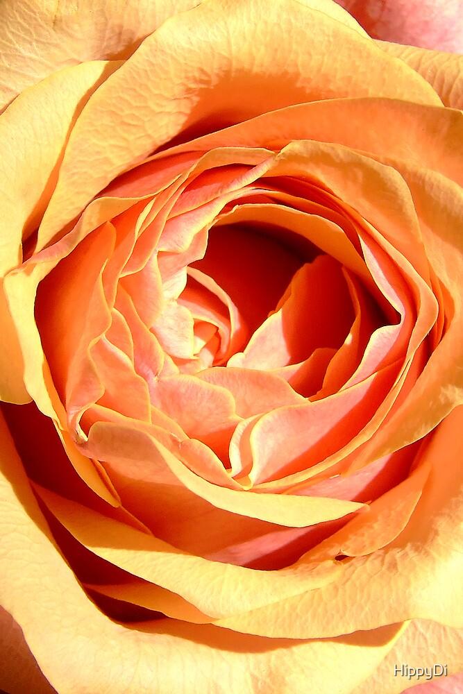 Cherry Brandy Rose - Open by HippyDi