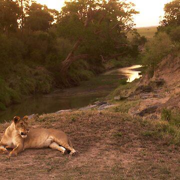 Masai Mara by grazgar