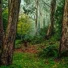 In The Mist - Mount Wilson and Mount Irvine by Philip Johnson