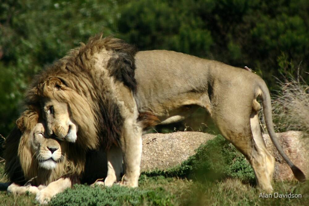 King of the Park by Alan Davidson