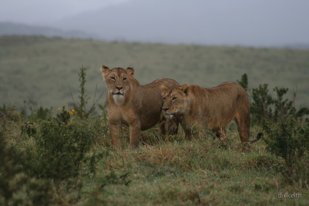 Lions on the Hunt - Ngorongoro Crater by dulkeith