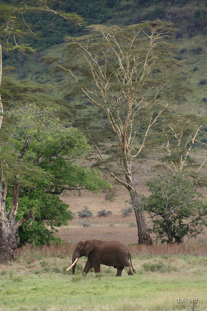 Elephant - Ngorongoro Crater by dulkeith