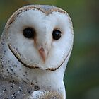 Barn Owl face by quentinjlang