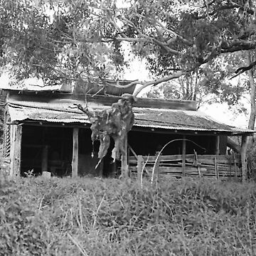The Old Woolshed, Trunkey Creek, NSW. by chrisjoy