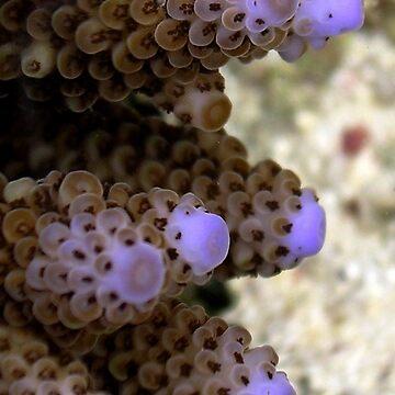 Corallo by grazgar