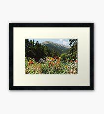 Mountain garden Framed Print
