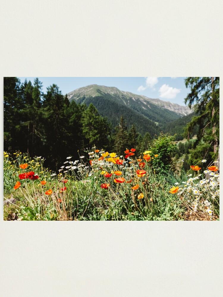 Alternate view of Mountain garden Photographic Print