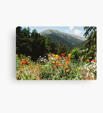 Mountain garden Canvas Print