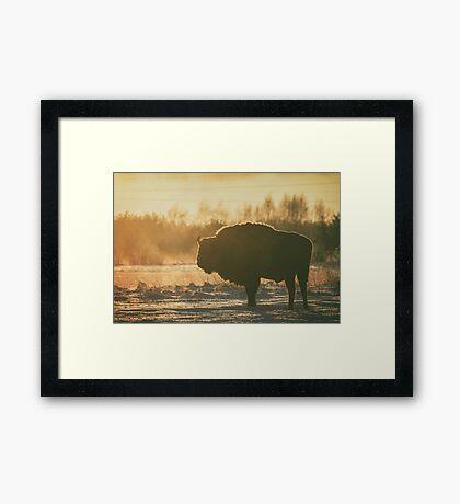 Bison Silhouette Framed Print